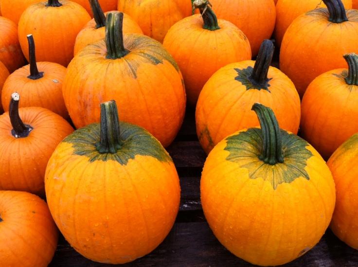 Pumpkins.  Wyoming County, October 2012. Photo Credit. Benjamin Judkins.