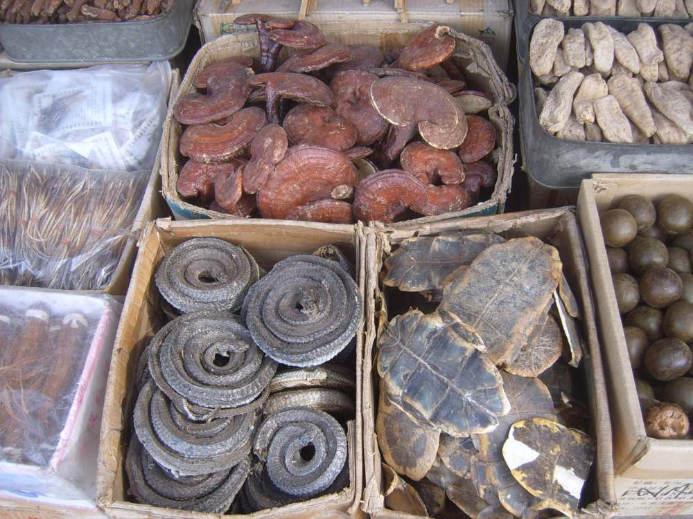 Exotic medical ingredients at a market stall for herbalists in Xian.