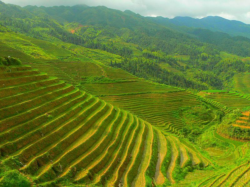 Longsheng county, Guilin, China.  Source: Wikimedia.