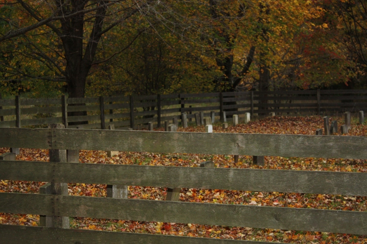 A small graveyard used by the Amish community in the Conewago Valley of Western NY. Source: Photo by Benjamin Judkins.
