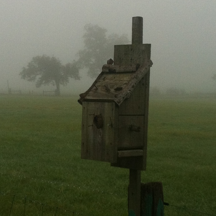 Forlorn birdhouse on a misty fall morning. Genesee Valley, Western NY. Source: Photo by Benjamin Judkins.
