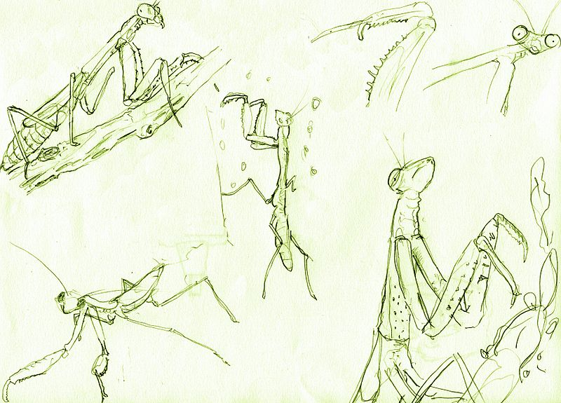 Acquiring Dark Powers In The Southern Mantis Tradition D S