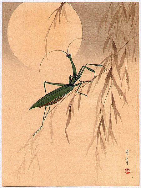Mantis by Watanabe Shotei (1851-1918).  Source: Wikimedia.