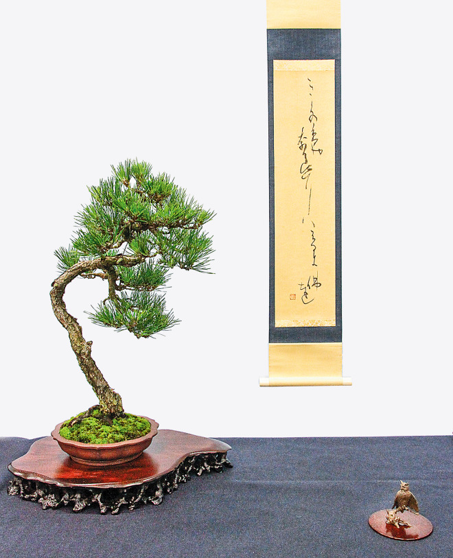 A shohin pine.  Proof that good things sometimes come in small packages.  Source: Valavanis Bonsai Blog.